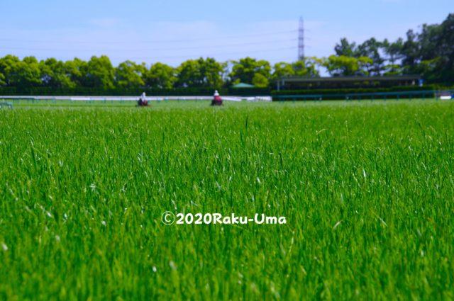 競馬場の芝生